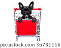 shopping cart dog 36781116