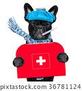 sick ill dog 36781124