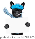sick ill dog 36781125