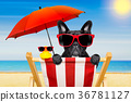 dog beach chair in summer 36781127