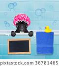 dog in shower 36781465