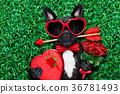 dog love valentines 36781493