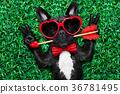 dog love valentines 36781495