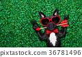 dog love valentines 36781496