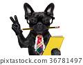 office worker dog 36781497