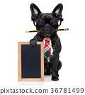 office worker dog 36781499