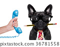 office worker dog 36781558