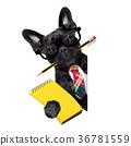 office worker dog 36781559
