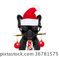 dog office worker on christmas holidays 36781575