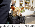 dog in transport box or bag ready to travel 36781589