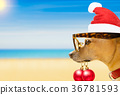 dog watching the beach on  christmas holidays 36781593
