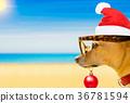 dog watching the beach on  christmas holidays 36781594