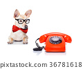 dog telephone 36781618