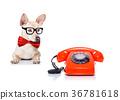 dog, phone, telephone 36781618