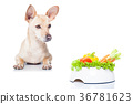 hungry dog with bowl 36781623