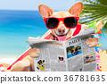 dog on hammock in summer 36781635