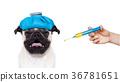 sick ill dog 36781651