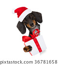 santa claus dog on christmas holidays 36781658
