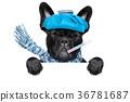 sick ill dog 36781687