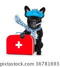 sick ill dog 36781693