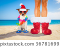 christmas, claus, dog 36781699