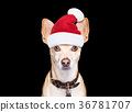 christmas dog as  santa claus 36781707