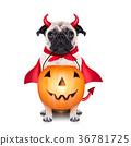 trick or treat dog 36781725