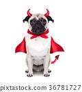 halloween devil dog 36781727