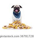 hungry dog 36781728