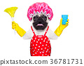 dog doing household chores 36781731