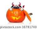 halloween pumpkin witch dog 36781740