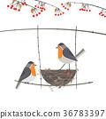 鳥兒 鳥 卡 36783397
