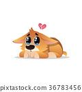 corgi dog puppy 36783456