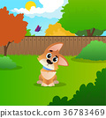 dog corgi animal 36783469