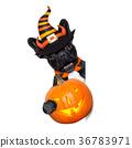halloween dog  banner 36783971