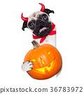 trick or treat dog 36783972