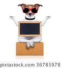 yoga dog 36783978