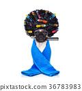 dog, groom, hair 36783983