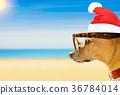 dog watching the beach on summer christmas  36784014