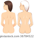 Nude Back Woman 36784522