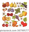 Set of colored berry and fruit icons 36799577