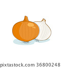 Onion Isolated on White 36800248
