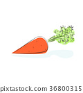 Carrot Isolated on White Background 36800315