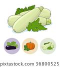 Icons Zucchini, Pumpkin, Eggplant 36800525