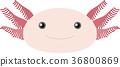Wooper looper 36800869