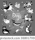 狗 狗狗 有趣 36801709