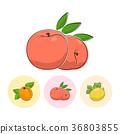 ลูกพีช,แอปริคอต,แตง 36803855