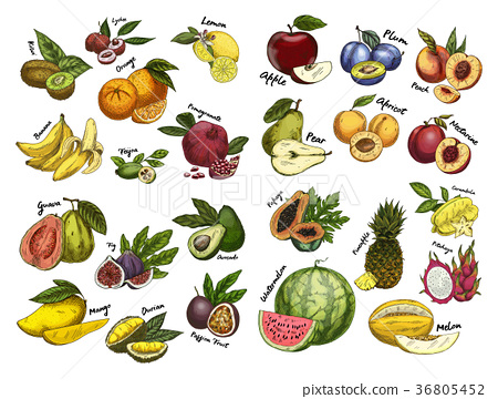 Sketches of fruit food. Agriculture theme 36805452