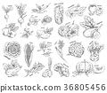 Sketch of vegetarian food. Vegetables 36805456