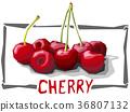 樱桃 插图 矢量 36807132